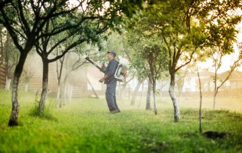 alberi_pesticidi