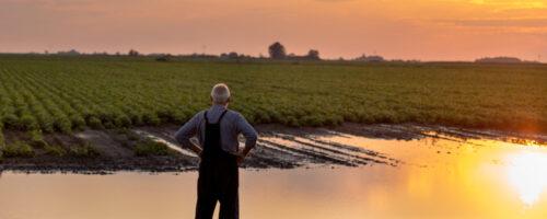 agricoltore